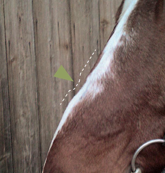 Was auf die Nase? | Pferdekosmos
